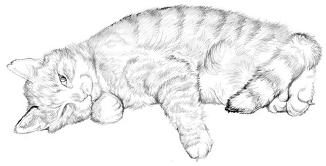 Illustration of a sleeping cat, black and white drawing. Image drawing on computer by graphic tablet.