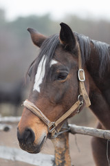 Portrait of a thoroughbred horse close up in nature.