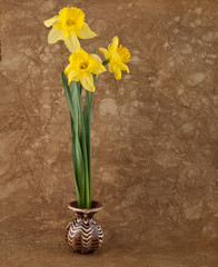 fresh spring flowers of daffodils