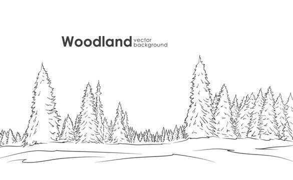 Vector illustration: Hand drawn Woodland landscape. Sketch with pine forest.