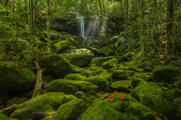 Stone and green moss in nature with waterfall