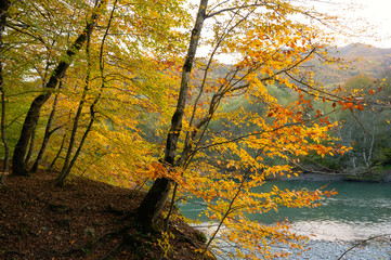 Trees with yellow foliage over mountains river