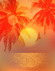 tropical sunset or sunrise