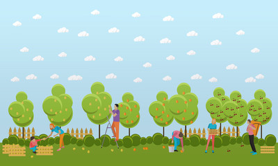 People picking fruit in garden, vector illustration.