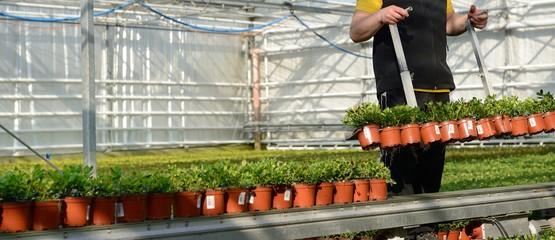 Banner Gartenbau Aussetzen bzw. Rücken
