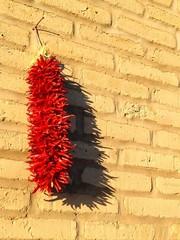 Chili-Ristra im Sonnenschein an einer Backsteinmauer