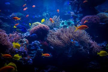 tropical fishes meet in blue coral reef sea water aquarium. Unde Wall mural