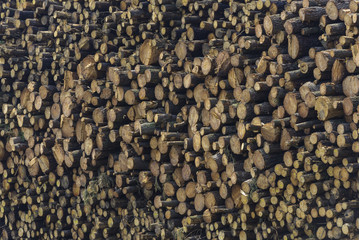 Logs texture.