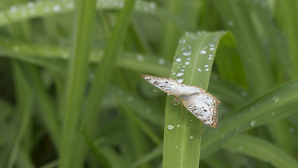 Butterfly on water drops