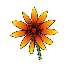 rudbeckia flower vector scetch