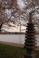 Japanese Pagoda at Washington DC Tidal Basin in spring with cherry blossoms