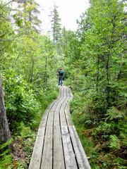 boardwalk hiking path through marsh