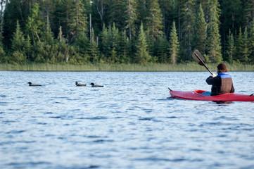 Kayaker watching loons