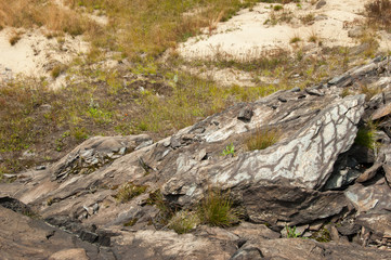 dry rockbed with grasses and lichens