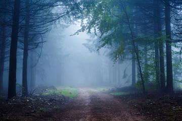 Misty Forest in Autumn Time