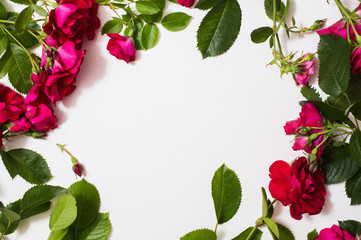 Frame of red beautiful roses with green leaves lie on white background. Place for design and text. Copyspace, flat lay, top view.