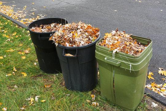 curbside yard waste collection, fallen tree leaves in trash bin in autumn season