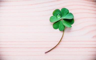 Clovers leaves on wooden background .The symbolic of Four Leaf Clover the fi