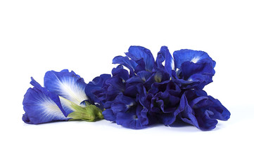 Blue pea butterfly pea close up background.