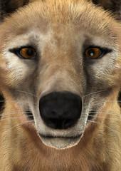 3D Rendering Thylacine