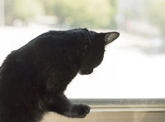 black cat sits near window and watches to somebody