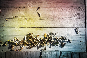 Colorful Wood Background with Dry Leaves. Wooden Planks.