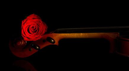 Violin and rose, Violin orchestra musical instruments