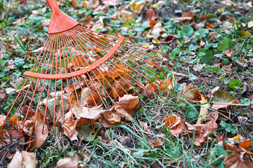 Heap of fall leaves with fan rake on lawn, closeup