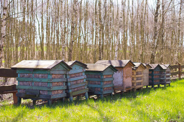 Honey bee hives in a row