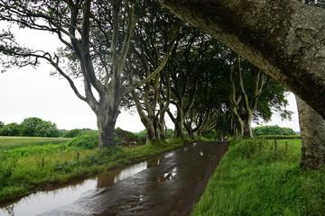 Alte Baumallee in Nordirland / Dark Hedges