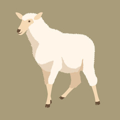 sheep vector illustration style Flat