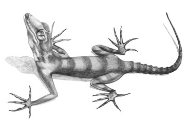 Lizard  hand-drawn illustration in sketch style