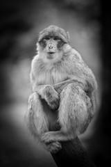 Wildlife Monkey Portrait in a tree