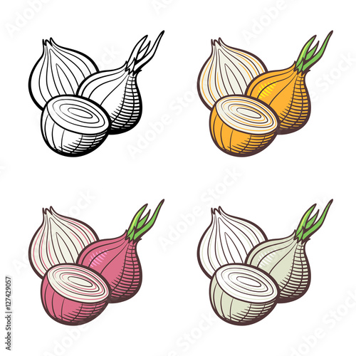 ... onion and outline version. Stylized vector illustration, isolated on