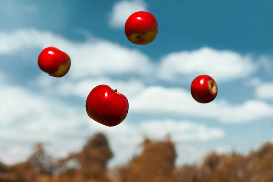 ripe apples in zero gravity thrown into the air