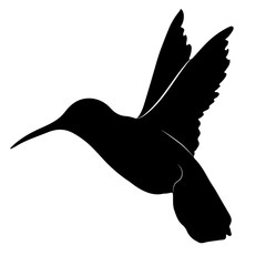 black and white silhouette of a hummingbird. Vector illustration of a small bird