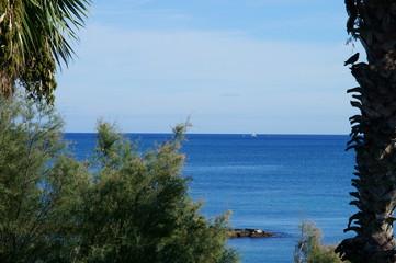 orizzonte marino visto dall'alto di un albero di palma