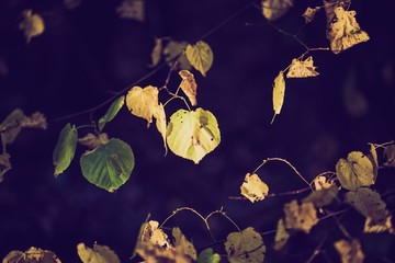 Vintage photo of yellow autumnal leaves