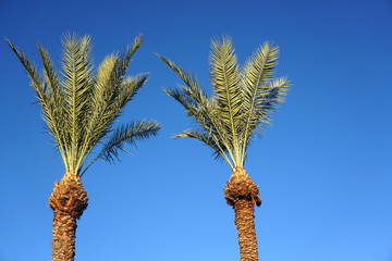 low angle view of palm tree in the morning sunlight