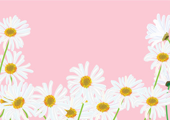 white daisy flowers isolated drawing .vector illustration for frame