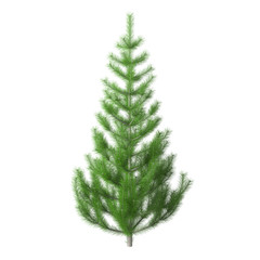 Young pine tree with bright green needles, isolated on white background with clipping path included. Undecorated Christmas tree. 3D rendering.