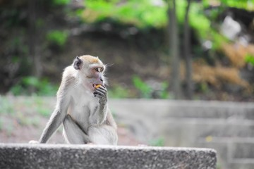 monkey selective focus in nature