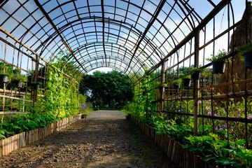 beautiful walk way plant tunnel