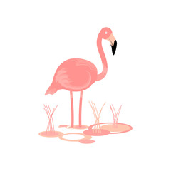 Flamingo Bird Vector