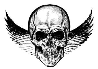 Hand drawn winged skull. Vector illustration EPS 10