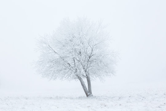 Whiteout on winter field with a tree