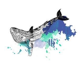 эскиз,художественный рисунок кит,акварель,тату
