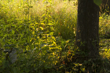 Close up green grass in sunrice
