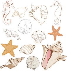 Icon set of original hand drawn vector illustration of several different seashells