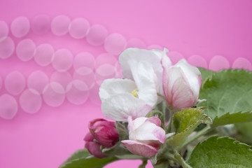 apple flowers and pink bokeh